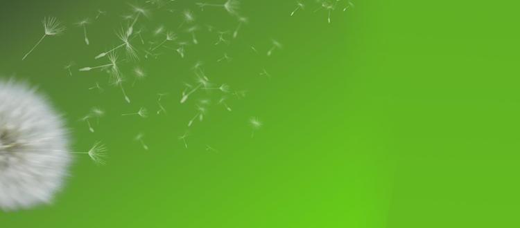 dandelion1-1.png