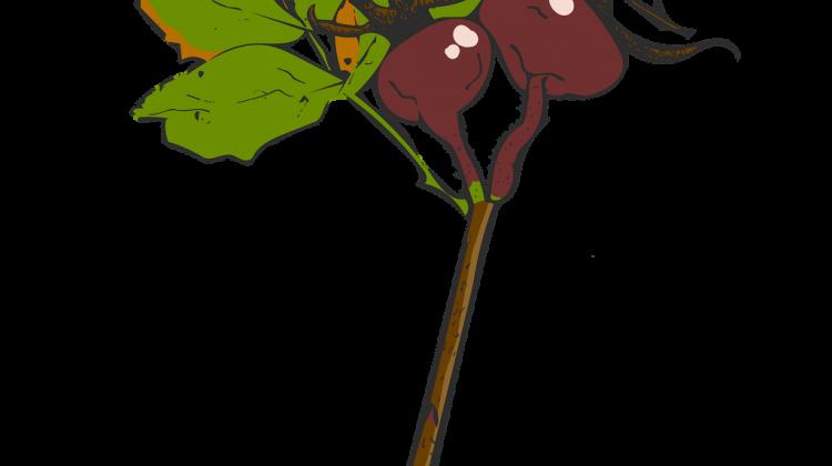 twig-4527983_1920.png