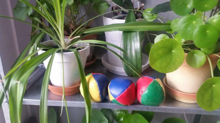 En bild som visar växt, inomhus, bord Automatiskt genererad beskrivning