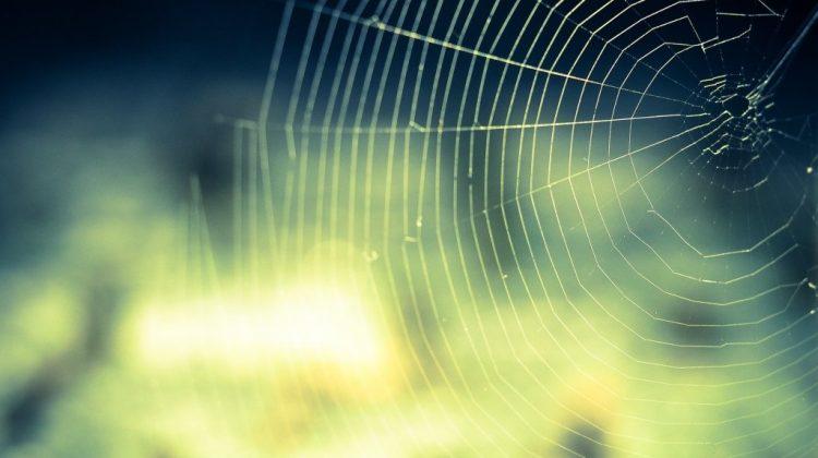 cobweb-959578_1920.jpg